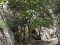 Gorges Regalon119