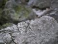 Gorges Regalon122