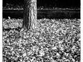 Tronc_noir et blanc
