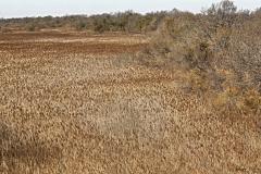 Marais de Vigueirat