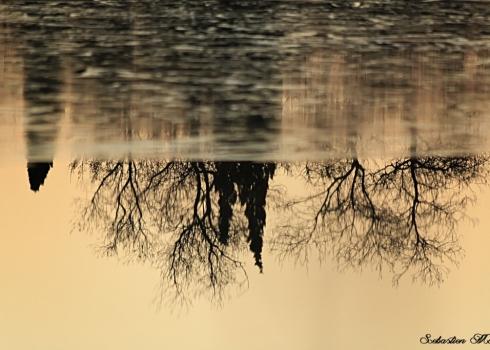 Marais Vigueirat Reflet 4