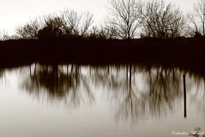 Marais Vigueirat Reflet 2