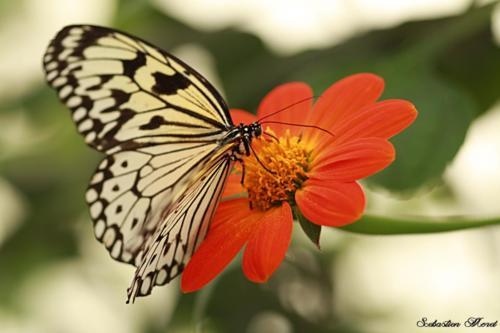 Ferme aux papillon